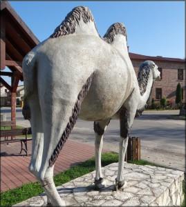 Wielbłąd z Chechła